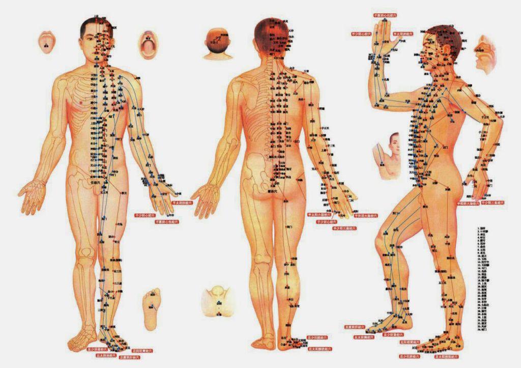 Khái niệm và cấu tạo và cấu tạo kinh mạch và lạc mạch Khái niệm và cấu tạo kinh mạch và lạc mạch