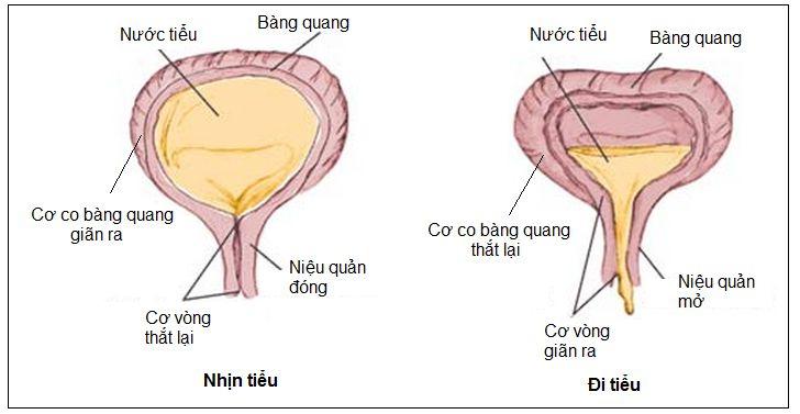 Đái dầm ở trẻ nhỏ và cách điều trị cổ truyền 1 Đái dầm ở trẻ nhỏ và cách điều trị cổ truyền