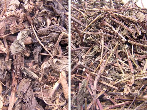 hoắc hương khô Chương 5: THUỐC THANH NHIỆT VỊ THUỐC ĐÔNG Y phần 2