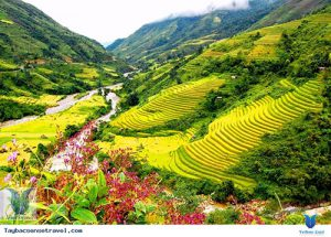 Bảo tồn quản lý và phát triển cây thuốc tỉnh Lào Cai