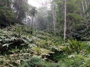 Làm giàu từ việc phát triển cây dược liệu Lào Cai có nên không?