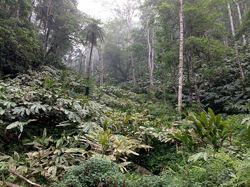 cây dược liệu Lào Cai Làm giàu từ việc phát triển cây dược liệu Lào Cai có nên không?