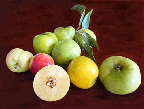 Sơn trà - quả chua chát CHƯƠNG 8 : THUỐC TIÊU HÓA VỊ THUỐC ĐÔNG Y