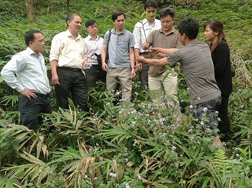 Sa nhân tím tại xã Phìn Ngan Bát Xát Làm giàu từ việc phát triển cây dược liệu Lào Cai có nên không?