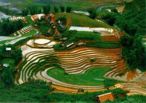 Nghiên cứu và triển khai tiến bộ kỹ thuật bền vững vào nông nghiệp ở Lai Châu