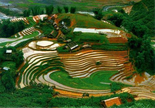 Phát triển nông nghiệp ở Lai Châu Nghiên cứu và triển khai tiến bộ kỹ thuật bền vững vào nông nghiệp ở Lai Châu
